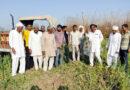 कृषि कानूनों के विरोध में किसान ने गेहूं कि फसल पर चलाया ट्रैक्टर